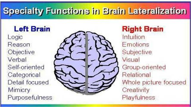lateralization of brain function pdf